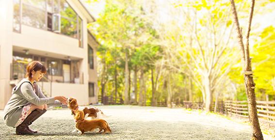 ペット と 泊まれる 宿